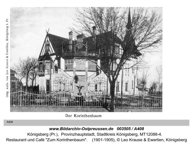 Königsberg, Korinthenbaum