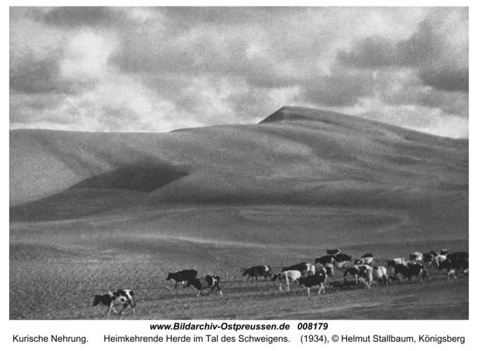 Kurische Nehrung, Heimkehrende Herde im Tal des Schweigens