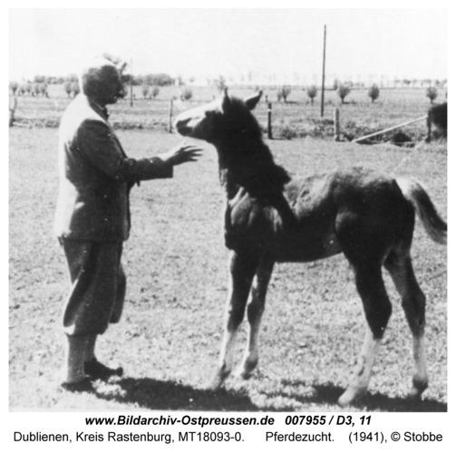Dublienen, Gut, Pferdezucht