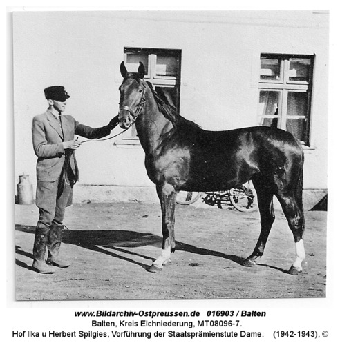 Balten, Hof Ilka u Herbert Spilgies, Vorführung der Staatsprämienstute Dame