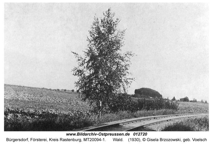 Bürgersdorf, Wald