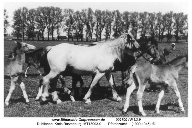 Dublienen, Pferdezucht