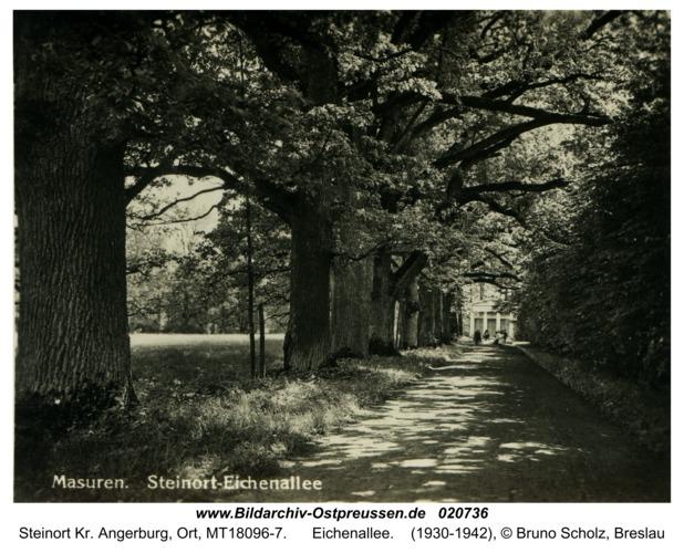 Steinort Kr. Angerburg, Eichenallee