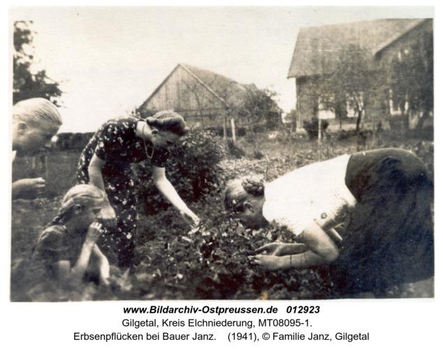 Gilgetal, Erbsenpflücken bei Bauer Janz