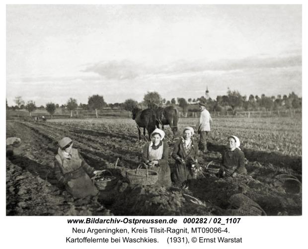 Argenbrück, Kartoffelernte bei Waschkies
