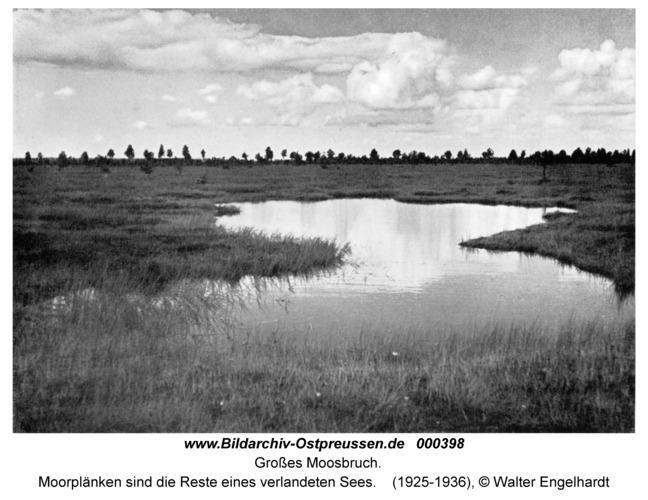 Großes Moosbruch, Moorplänken sind die Reste eines verlandeten Sees
