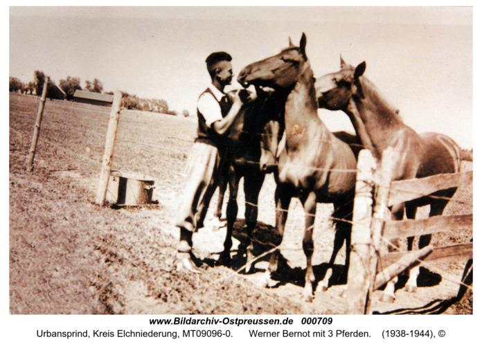 Urbansprind, Werner Bernot mit 3 Pferden