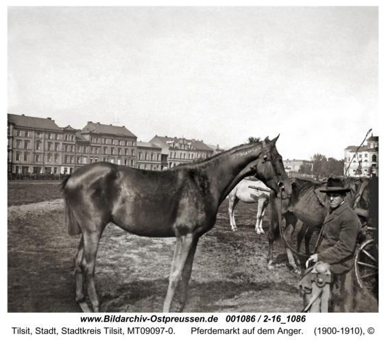Tilsit, Pferdemarkt auf dem Anger