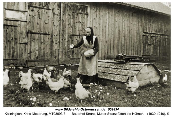 Kallningken, Bauerhof Stranz, Mutter Stranz füttert die Hühner