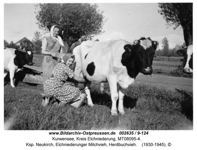 Kurwensee, Ksp. Neukirch, Elchniederunger Milchvieh, Herdbuchvieh