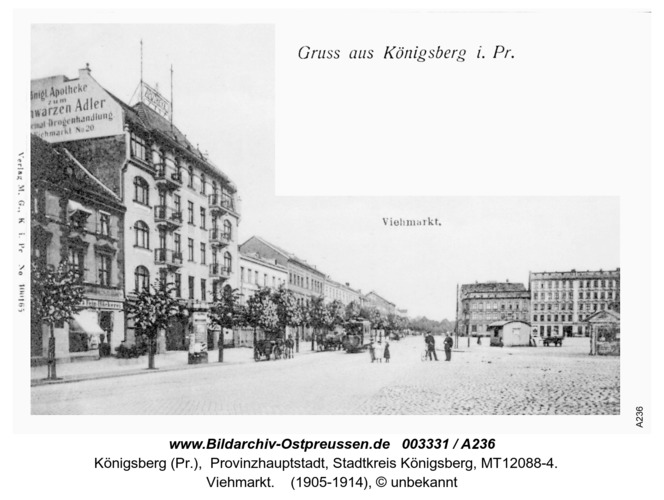 Königsberg, Viehmarkt
