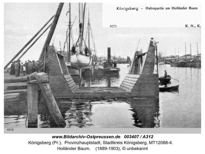 Königsberg, Holländer Baum