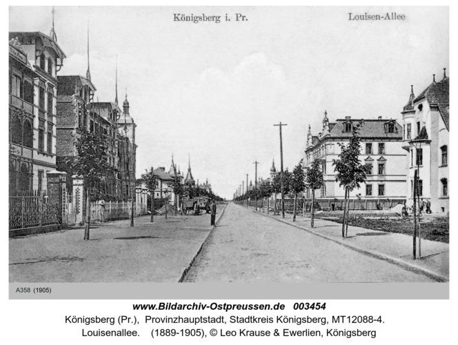 Königsberg, Louisenallee