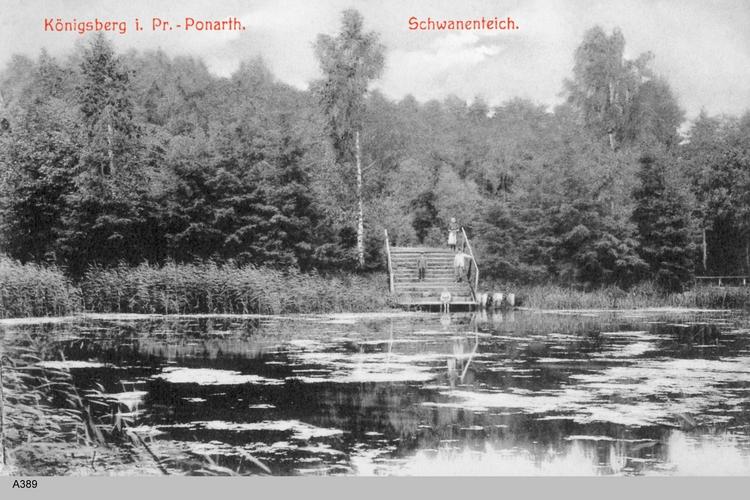 Königsberg, Ponarth, Schwanenteich