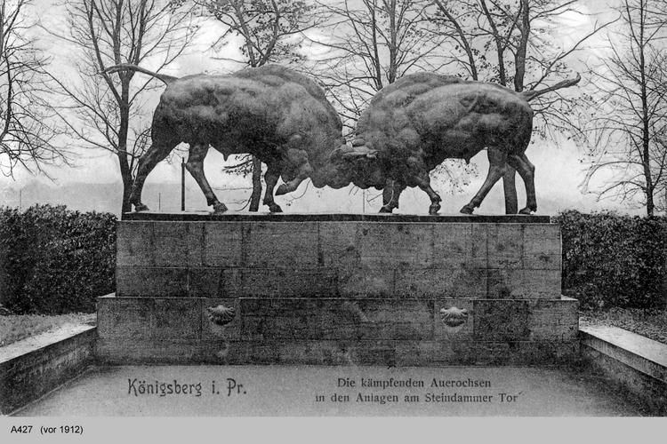 Königsberg, Auerochsen am Steindammtor
