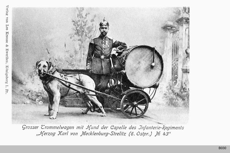 Königsberg, Trommelwagen des 6. Ostpreußischen Infanterie-Regiments