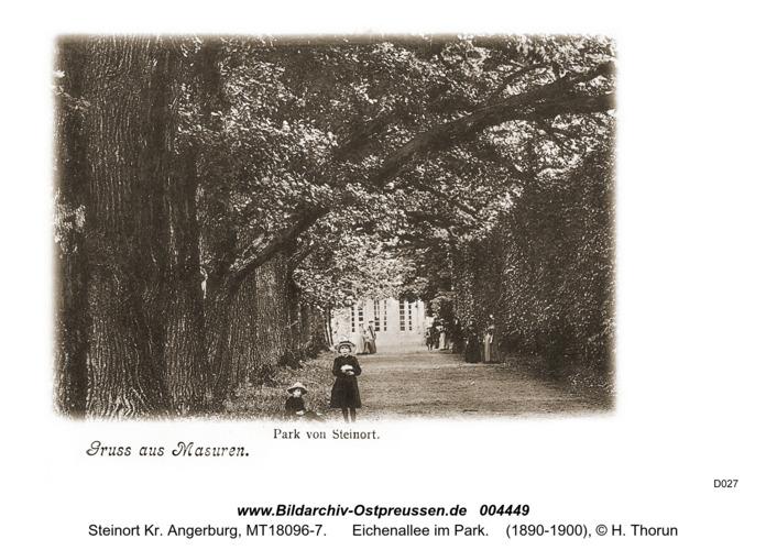 Steinort Kr. Angerburg, Eichenallee im Park