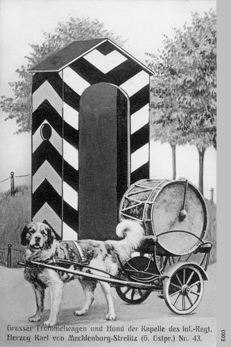 Königsberg, Trommelwagenhund der 43er