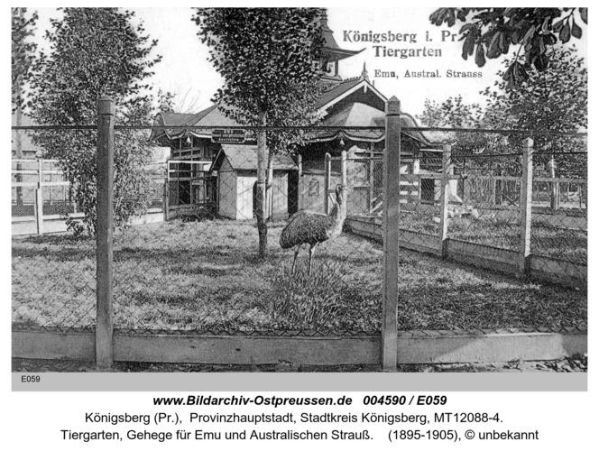 Königsberg, Emu im Tiergarten