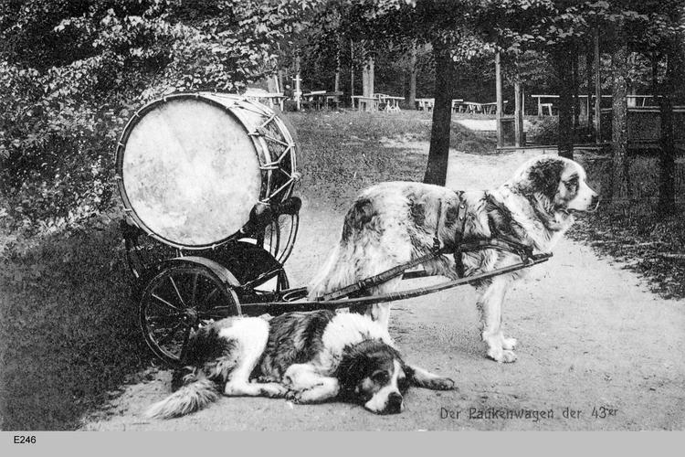 Königsberg, Paukenhunde der 43er
