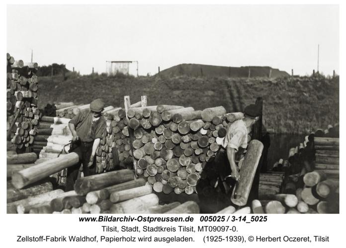 Tilsit, Zellstoff-Fabrik Waldhof, Papierholz wird ausgeladen