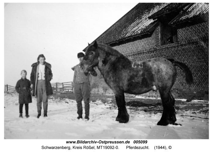 Schwarzenberg, Pferdezucht