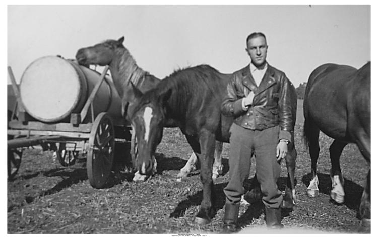 Schwarzenberg, Pferde auf der Weide
