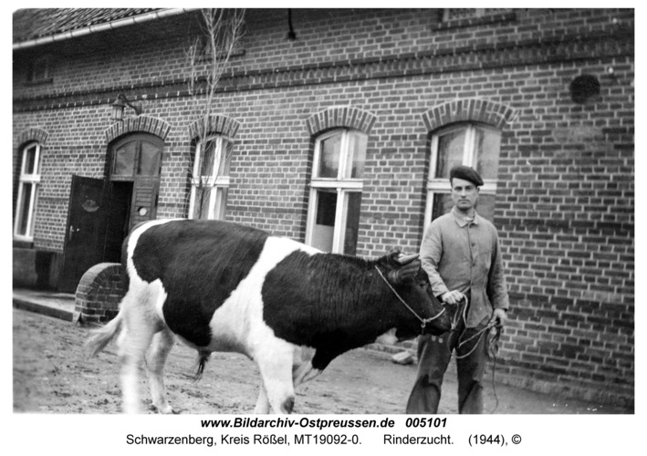 Schwarzenberg, Rinderzucht
