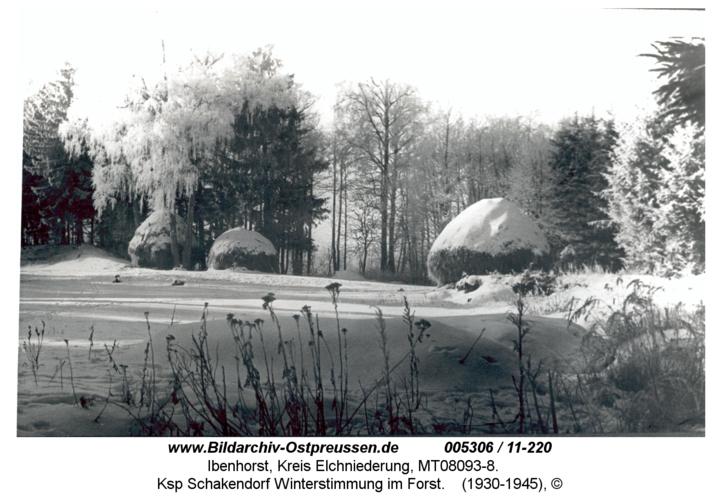 Ibenhorster Forst, Ksp Schakendorf Winterstimmung im Forst