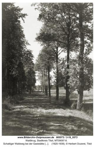 Waldkrug Stadtkr. Tilsit, Schattiger Waldweg bei der Gaststätte Waldkrug