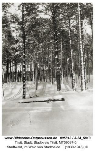 Tilsit, Stadtwald, im Wald von Stadtheide