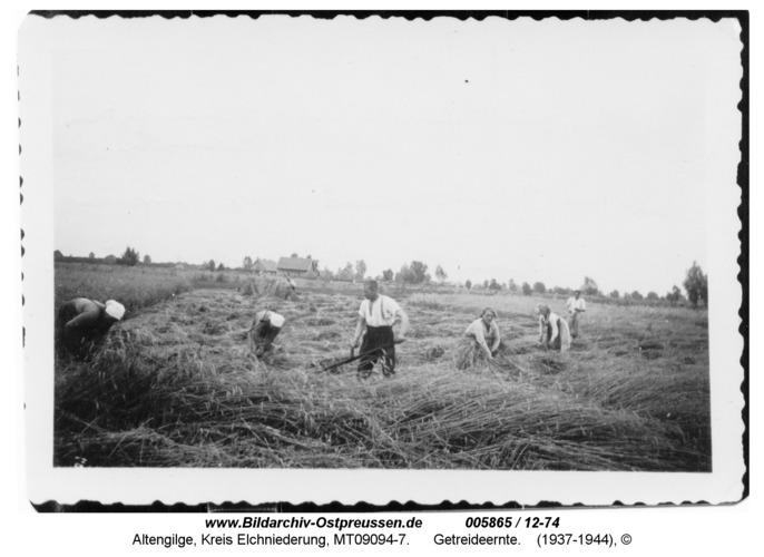 Altengilge, Getreideernte