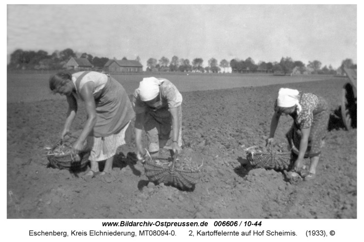 Eschenberg, 2, Kartoffelernte auf Hof Scheimis