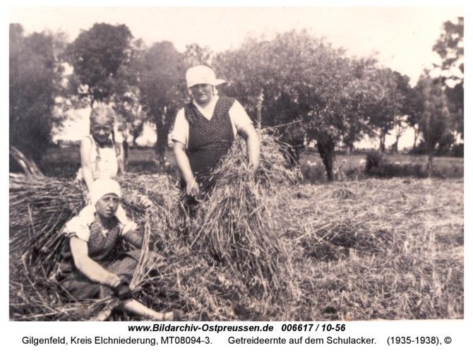 Gilgenfeld, Getreideernte auf dem Schulacker