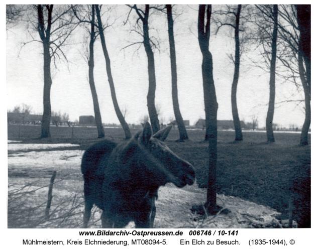 Mühlmeistern, Ein Elch zu Besuch