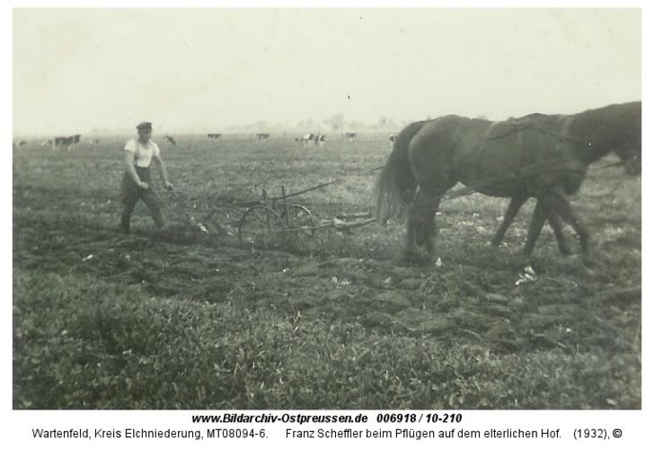 Wartenfeld, Franz Scheffler beim Pflügen auf dem elterlichen Hof