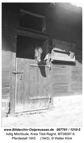 Adlig Milchbude, Pferdestall 1943