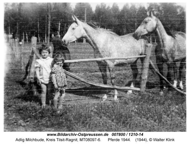 Adlig Milchbude, Pferde 1944