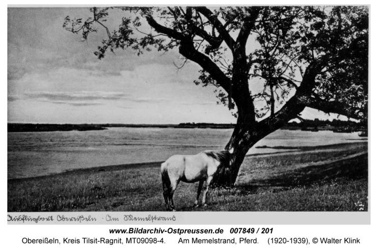 Obereißeln, Am Memelstrand, Pferd