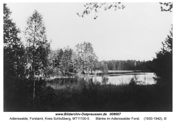 Adlerswalde, Blänke im Adlerswalder Forst