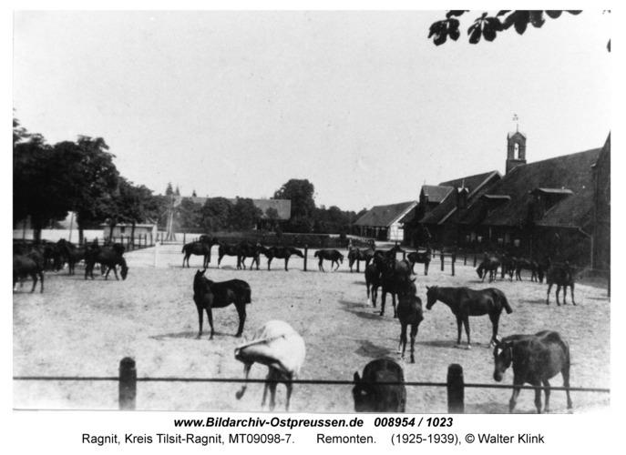 Ragnit-Neuhof, Remonten