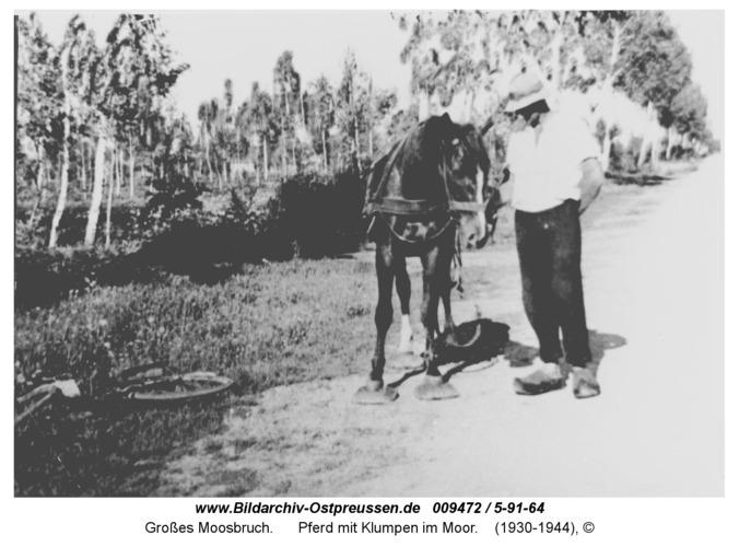 Großes Moosbruch, Pferd mit Klumpen im Moor