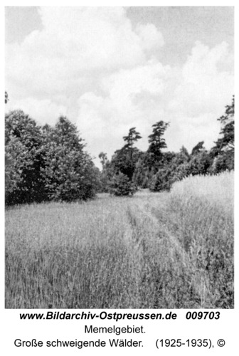 Memelgebiet, Große schweigende Wälder