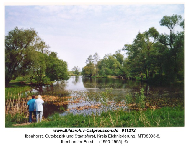 Ibenhorster Forst
