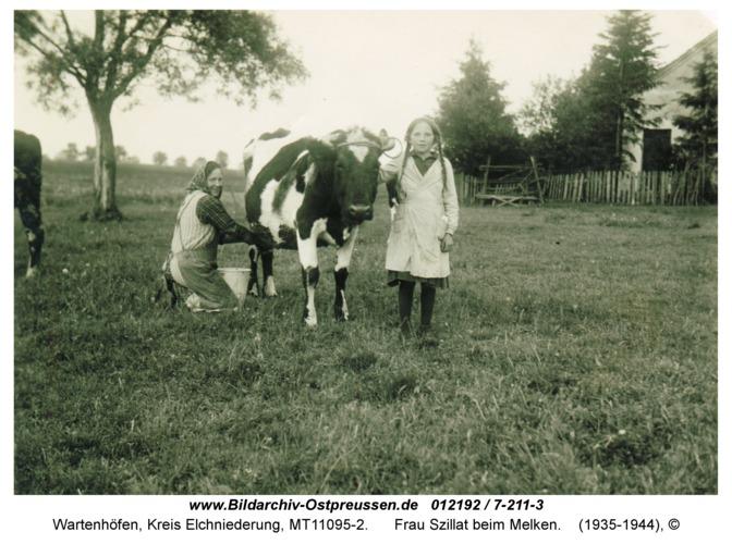 Wartenhöfen, Frau Szillat beim Melken