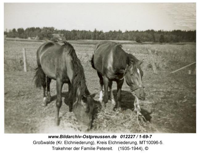 Großwalde, Trakehner der Familie Petereit