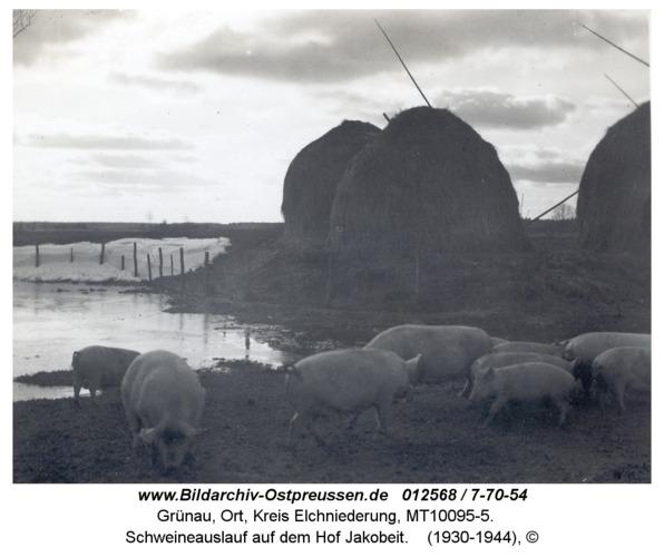 Grünau, Schweineauslauf auf dem Hof Jakobeit