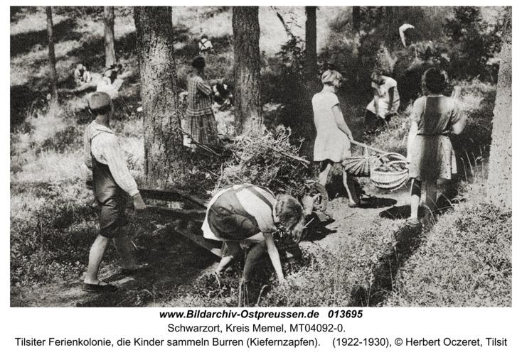 Schwarzort, Tilsiter Ferienkolonie, die Kinder sammeln Burren (Kiefernzapfen)