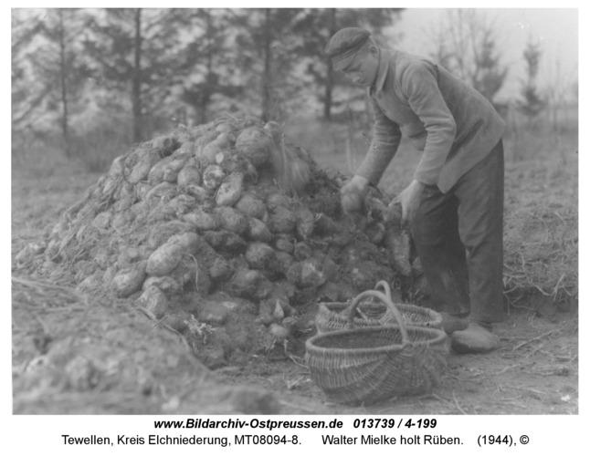 Tewellen, Walter Mielke holt Rüben