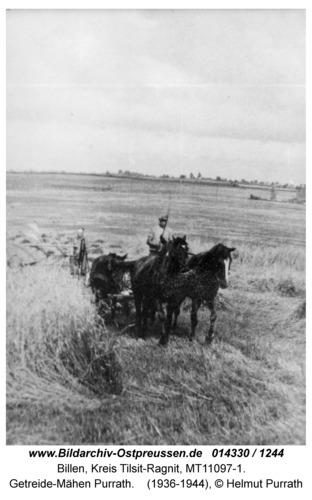 Billen, Getreide-Mähen Purrath